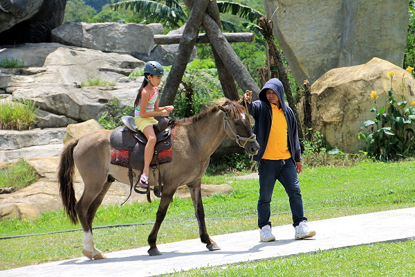 Campuestohan Horse back riding