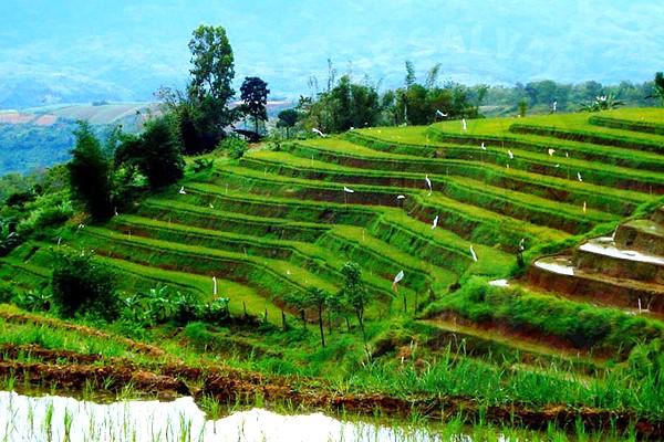 Don Salvador Benedicto Rice Terraces