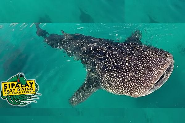 Sipalay Diving Resort